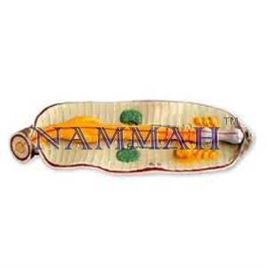 Earthworm Anatomical